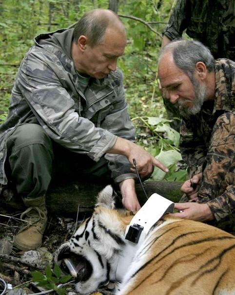 bobard,poutine,tigre